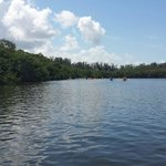 Entering mangroves