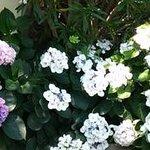 Blumenpracht im Hotel Seramanis