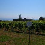 lighthouse and vineyard