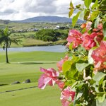 golf area