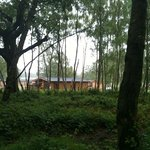 view of our lodge from the walk in the woods