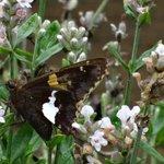 Butterflies love the perennials