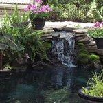 Courtyard Koi Pond and Waterfalls