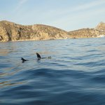 VLE - Happy Seal floating in the Sea of Cortez