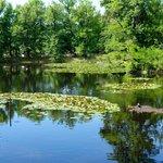 The castle garden pond.