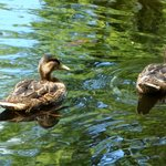Two of the many birds and fish in the castle garden pond.