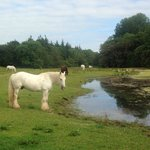 Some of the residents of Castlemartyr