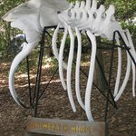 MacKerricher SP - whale bones