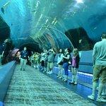 Georgia Aquarium 3
