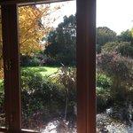 Garden view from window of the Premium Suite.