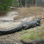 Hartley's biggest croc