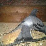 attic picture 1