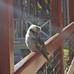 Visitor to the verandah