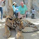 Tiger Temple Thailand Tour Foto