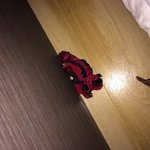 Pair of stray underwear left behind by someone else and not disposed by the hotel!