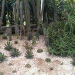 Funky cactus garden