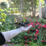 Hand feeding the birds