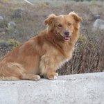OUR DOG - DIAS the god of the gods ( from our Mythologi)