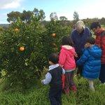 Bloody orange tree