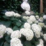 withe hidrangeas cloud  in the garden
