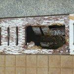 Dangerous wooden gulley cover