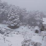 24 hrs Snow fall