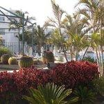 jardin de cactus au bord de la grande piscine