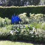 Delphiniums really were this blue!