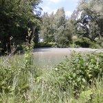 The lake with carp