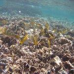 prise de vue sous marine
