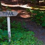 There are miles of hiking trails through the national forest from your door