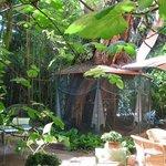 jardin et cage des perroquets