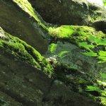 Beautiful sunlit fern growing on side of rocks.