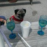 BeBe the Pug waiting for dinner to arrive outside at Home Port
