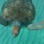 More Turtle shots
