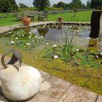Lily pond and fountain