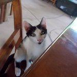 Mickey, the resident kitty at Kahiki