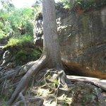 Table Mountain National Park - Bledne Skaly rock maze