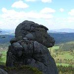 Table Mountain National Park -  Monkey Head