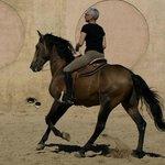 Libbi Riding Lucitano