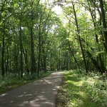 Busse Woods Trail System