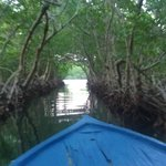 Mangrove boat ride from the tour