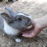 free rabbit in the garden