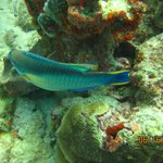Just a picture from diving. Do not forget do dive on Aruba