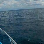 se alcanza a ver un delfin a un costado de la lancha en la punta!!!