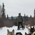 Crazy dogsled guide riding backwards.
