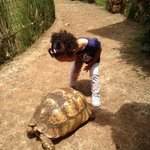 My daughter loved the turtle