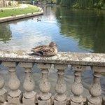 duck bathing
