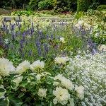 Rose Garden - Green Lake Park