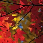 an autumn bonus... fall color